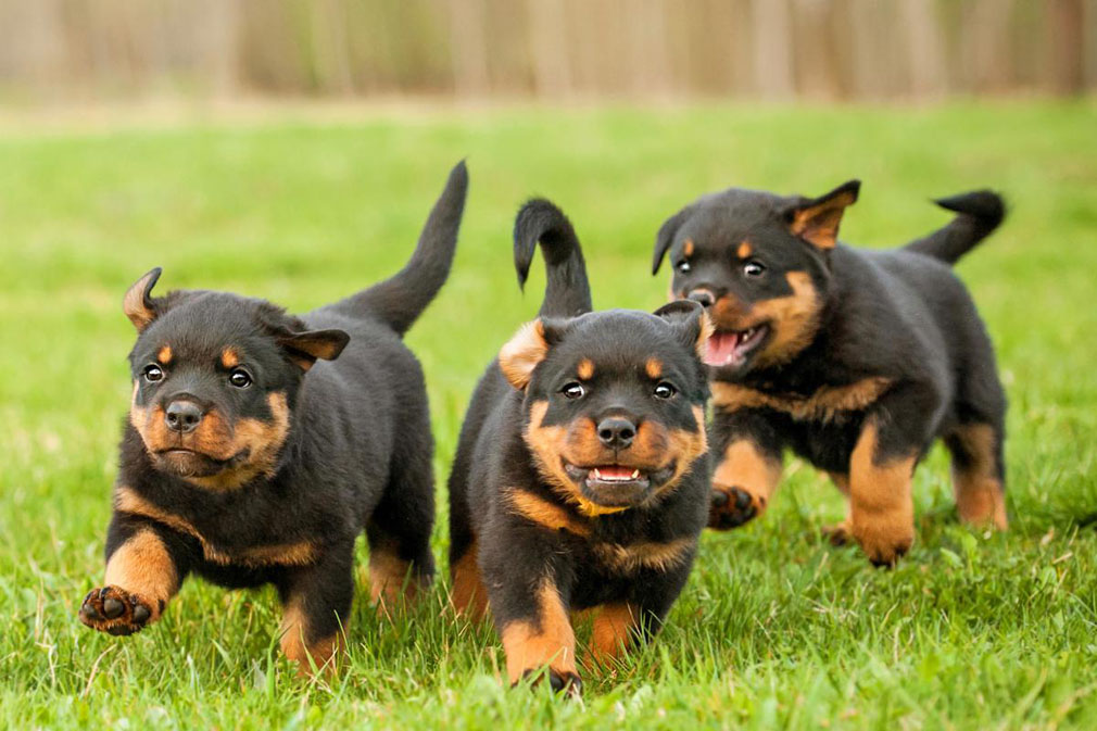 What Are Good Dog Breeds That Can Be Alone